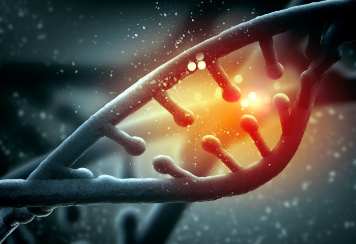 Genetic algorithms are inspired by DNA